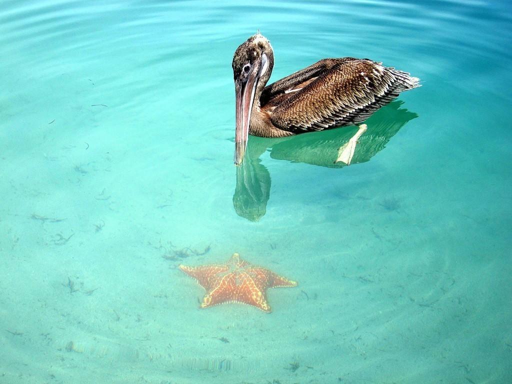 BocaDelDrago01 Пляж морских звезд — Бока дель Драго