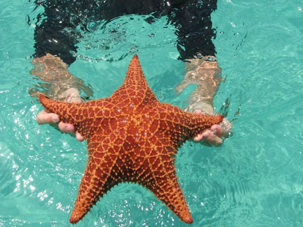 BocaDelDrago02 Пляж морских звезд — Бока дель Драго