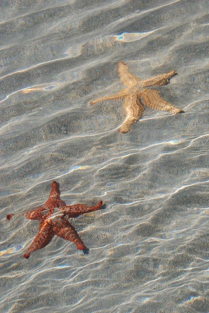 BocaDelDrago03 Пляж морских звезд — Бока дель Драго
