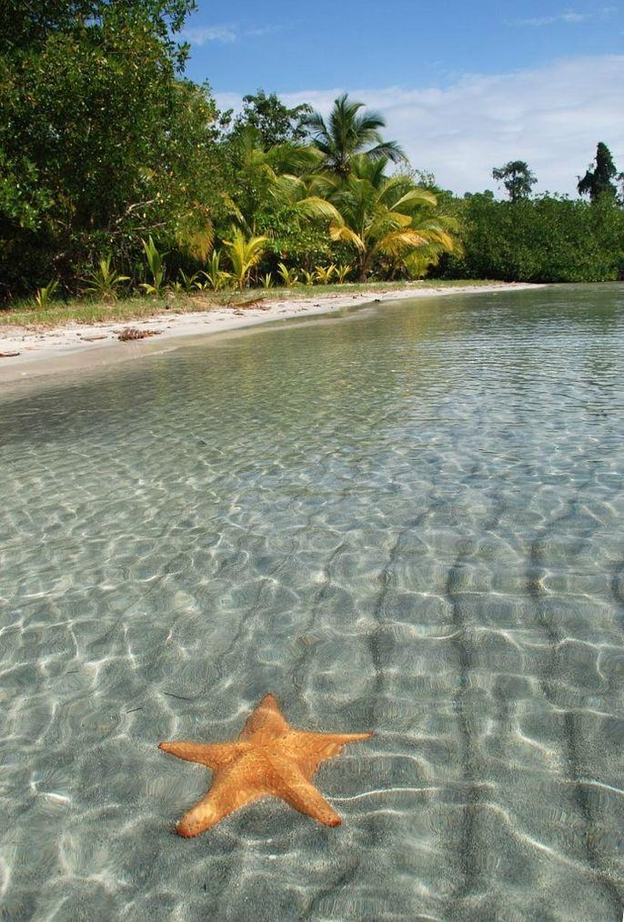 BocaDelDrago04 Пляж морских звезд — Бока дель Драго