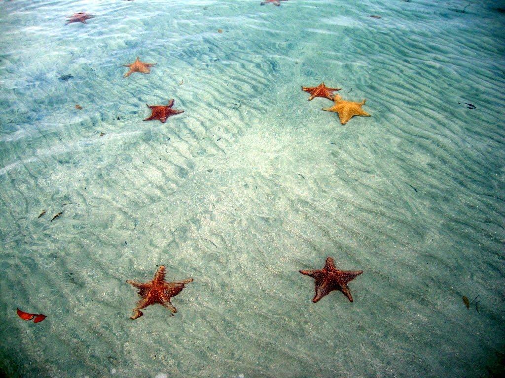 BocaDelDrago05 Пляж морских звезд — Бока дель Драго