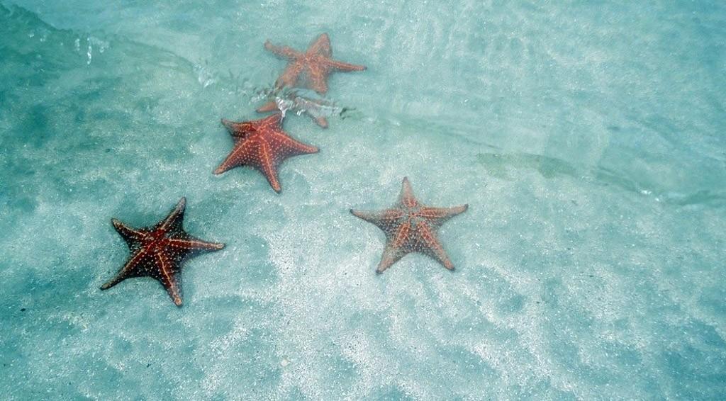 BocaDelDrago06 Пляж морских звезд — Бока дель Драго