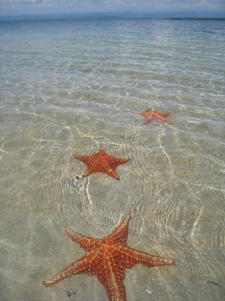 BocaDelDrago07 Пляж морских звезд — Бока дель Драго