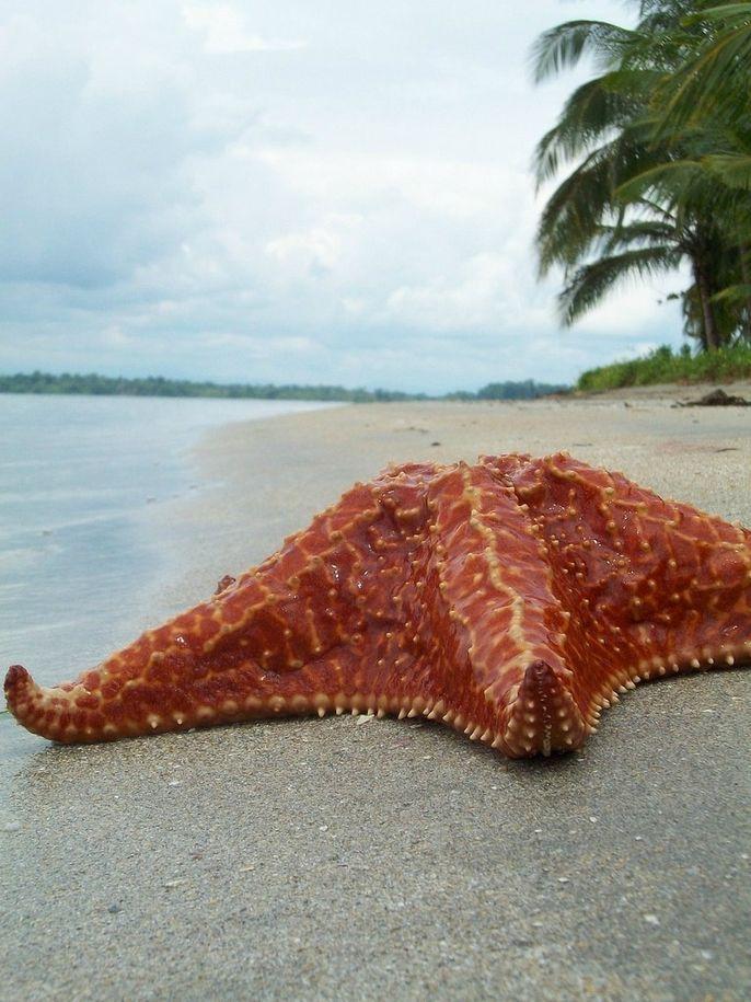 BocaDelDrago09 Пляж морских звезд — Бока дель Драго