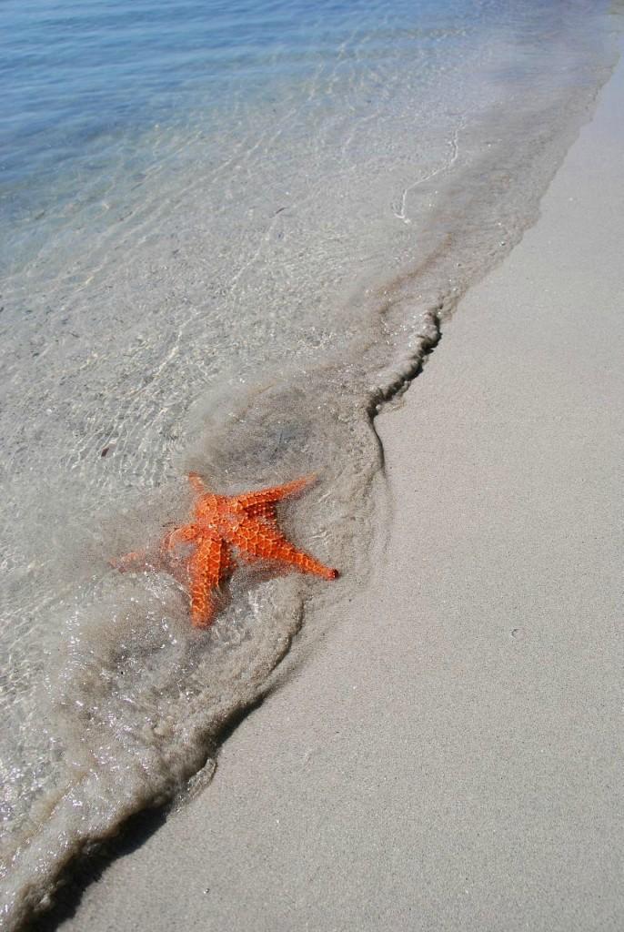 BocaDelDrago10 Пляж морских звезд — Бока дель Драго