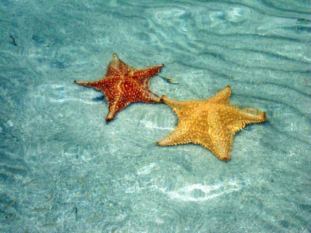 BocaDelDrago12 Пляж морских звезд — Бока дель Драго