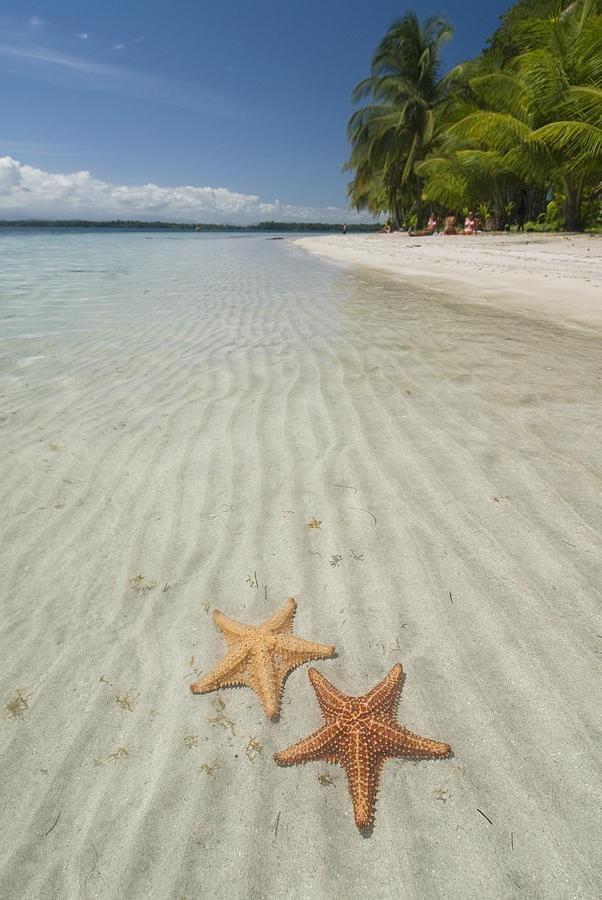 BocaDelDrago14 Пляж морских звезд — Бока дель Драго