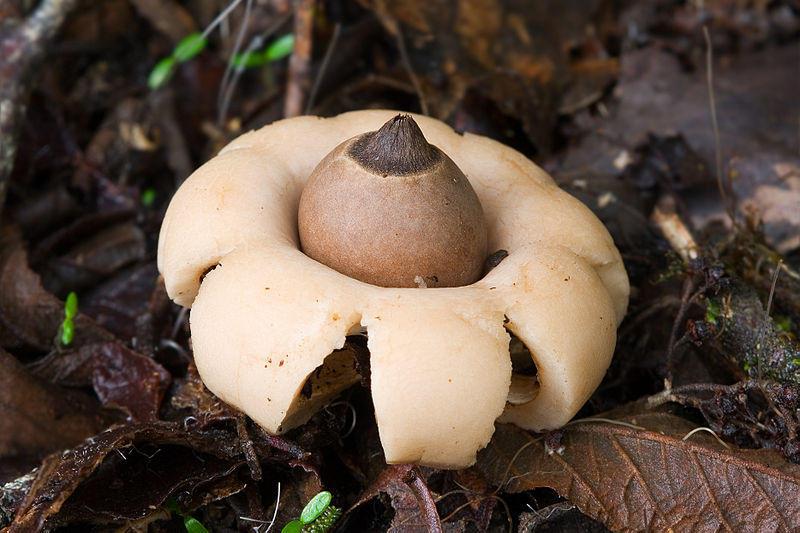 Fungi06 Самые красивые грибы в мире