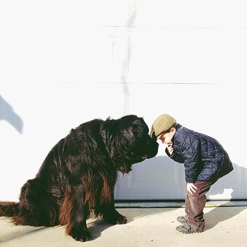 Genuine Love Between a Little Boy and His Big Dog 1 Маленький друг, большой друг