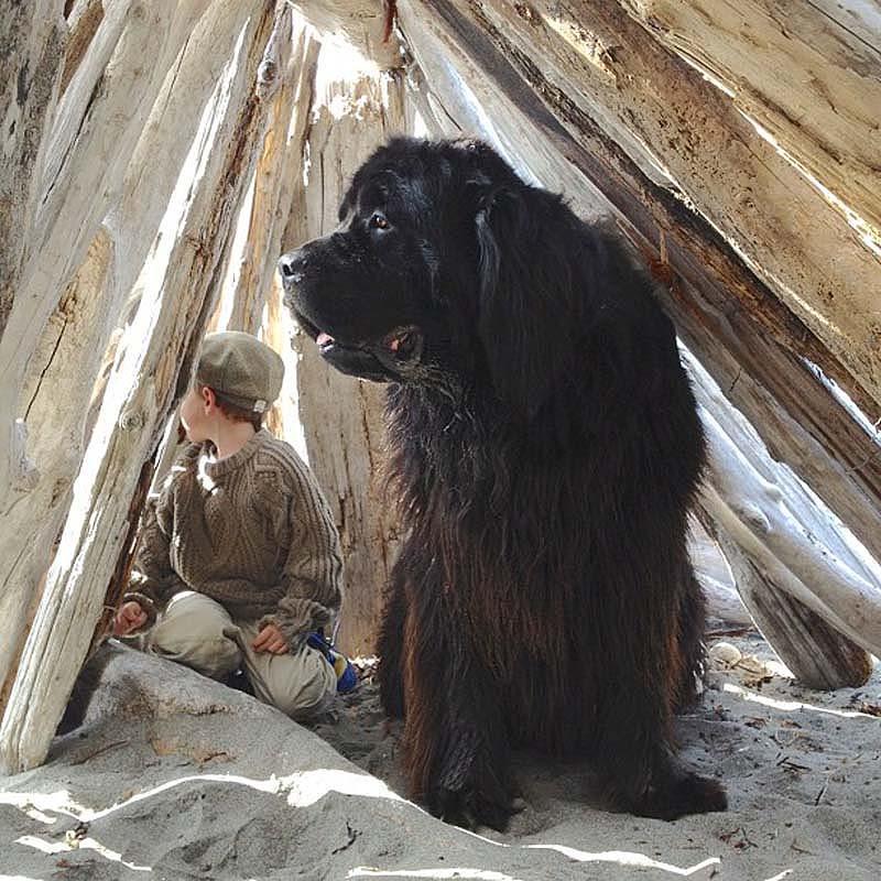 Genuine Love Between a Little Boy and His Big Dog 10 Маленький друг, большой друг