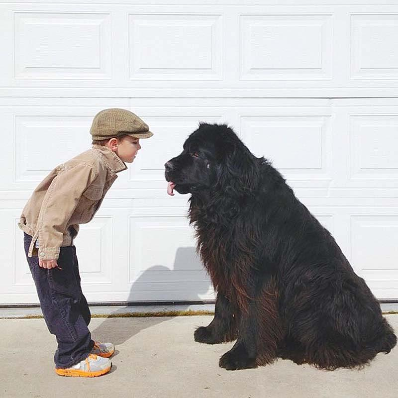Genuine Love Between a Little Boy and His Big Dog 2 Маленький друг, большой друг