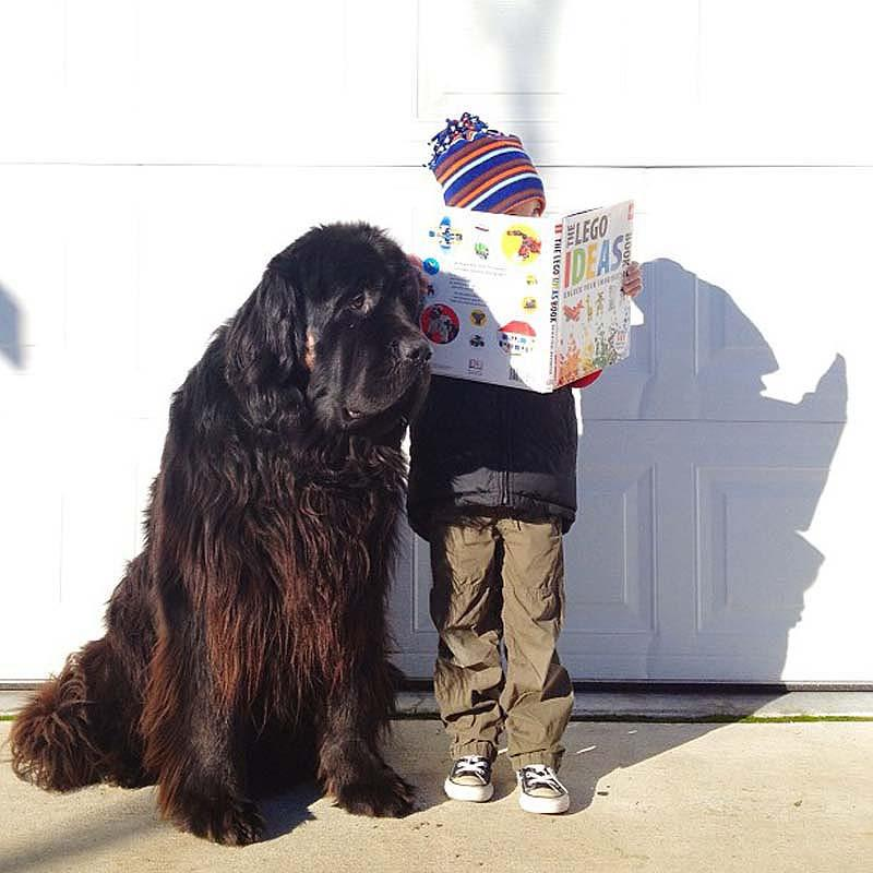 Genuine Love Between a Little Boy and His Big Dog 3 Маленький друг, большой друг