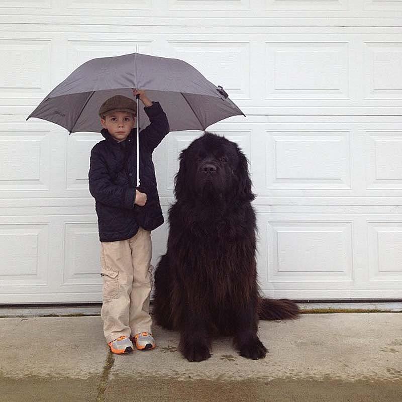 Genuine Love Between a Little Boy and His Big Dog 5 Маленький друг, большой друг