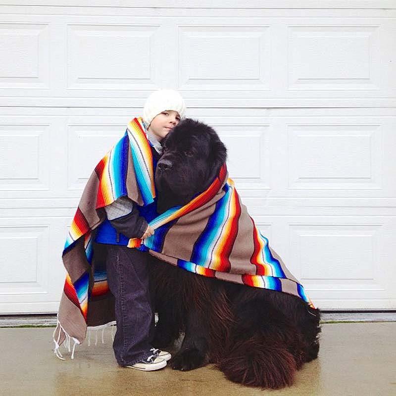 Genuine Love Between a Little Boy and His Big Dog 7 Маленький друг, большой друг