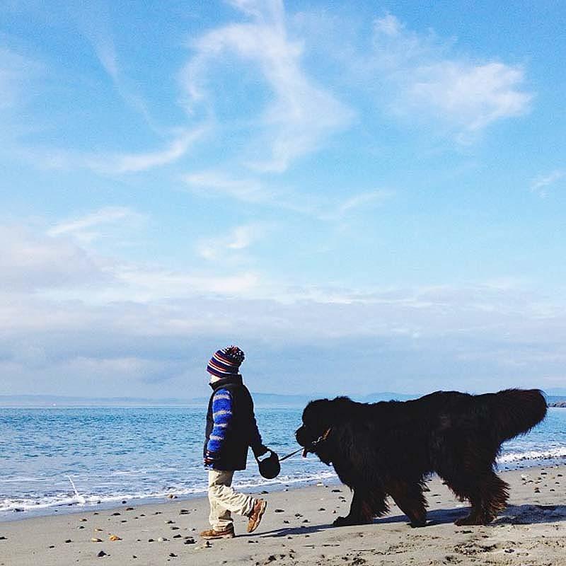 Genuine Love Between a Little Boy and His Big Dog 8 Маленький друг, большой друг