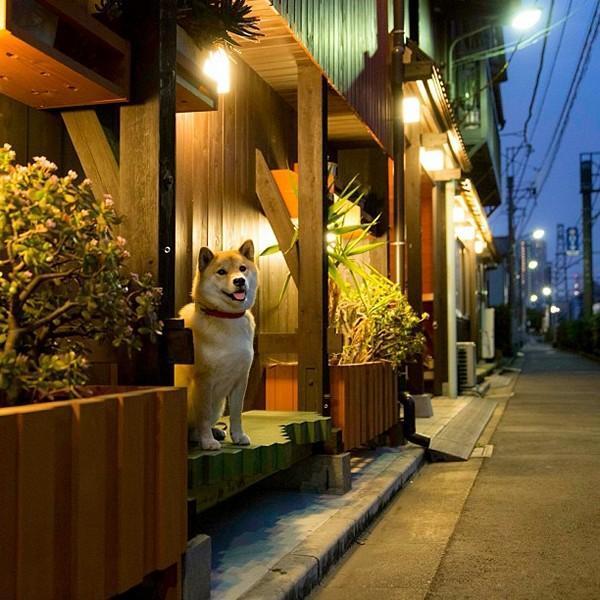 Marutaro02 Милый пёс Марутаро