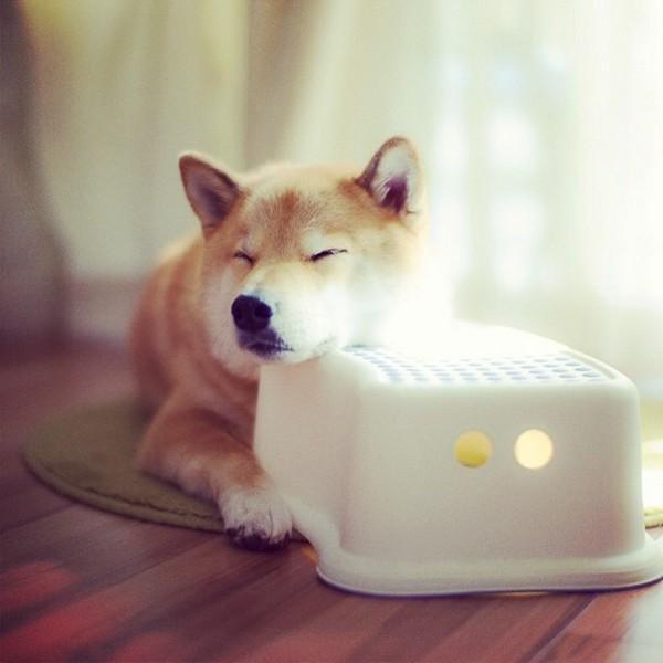 Marutaro06 Милый пёс Марутаро