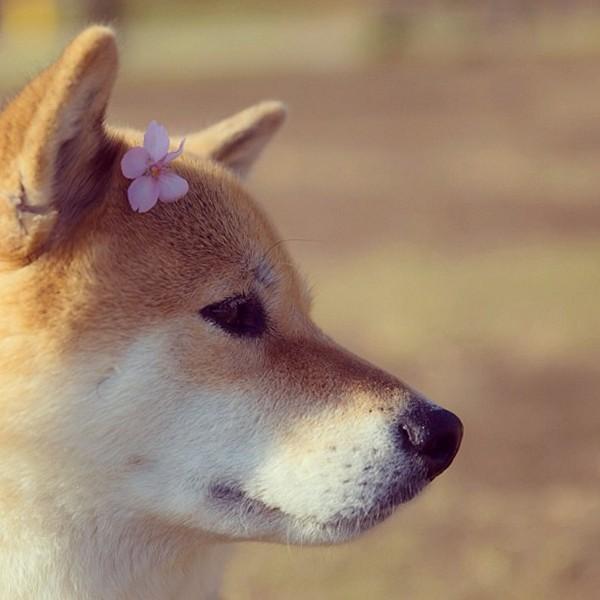 Marutaro13 Милый пёс Марутаро