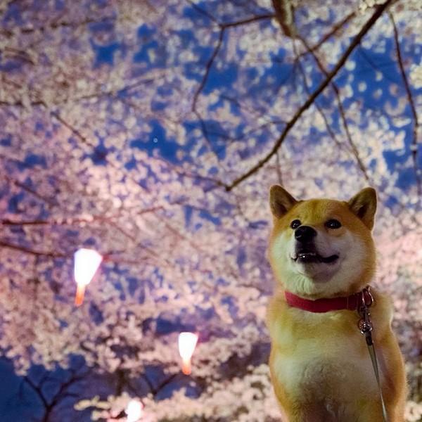 Marutaro18 Милый пёс Марутаро