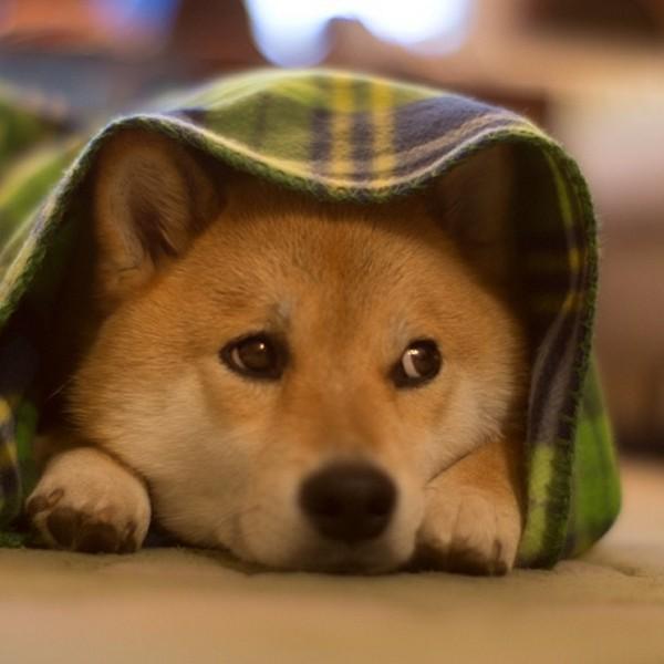 Marutaro22 Милый пёс Марутаро
