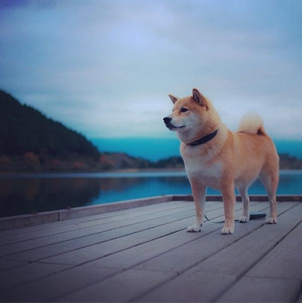 Marutaro26 Милый пёс Марутаро