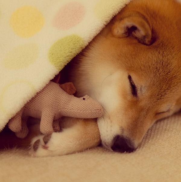 Marutaro27 Милый пёс Марутаро