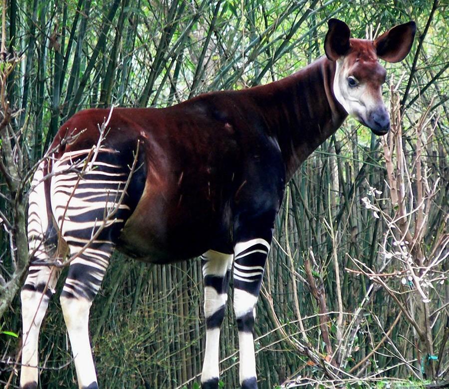 mixanimal04 8 животных, выглядящих как другие животные, скрещенные с ещё какими то животными