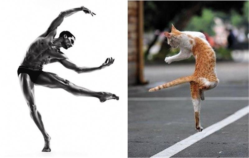modelvscat12 Модели vs Коты