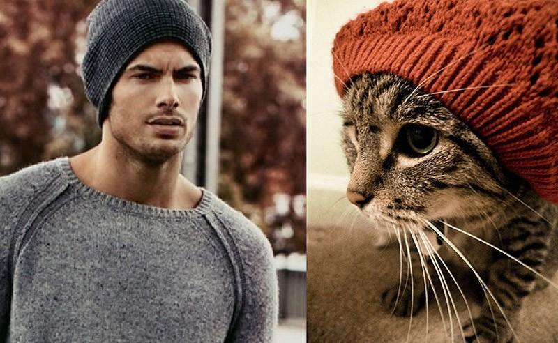modelvscat16 Модели vs Коты