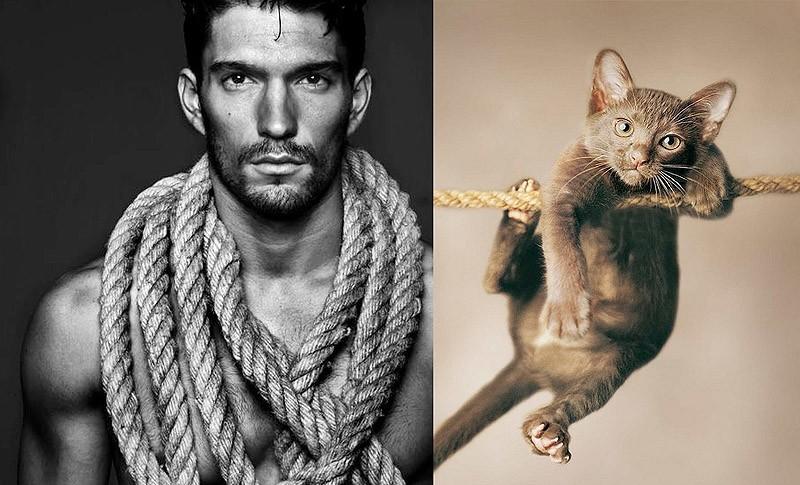 modelvscat18 Модели vs Коты