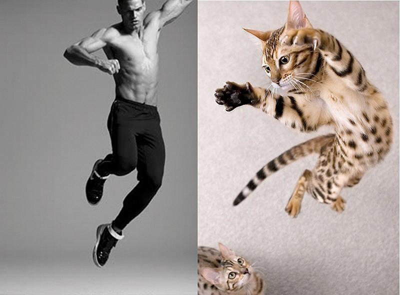 modelvscat31 Модели vs Коты
