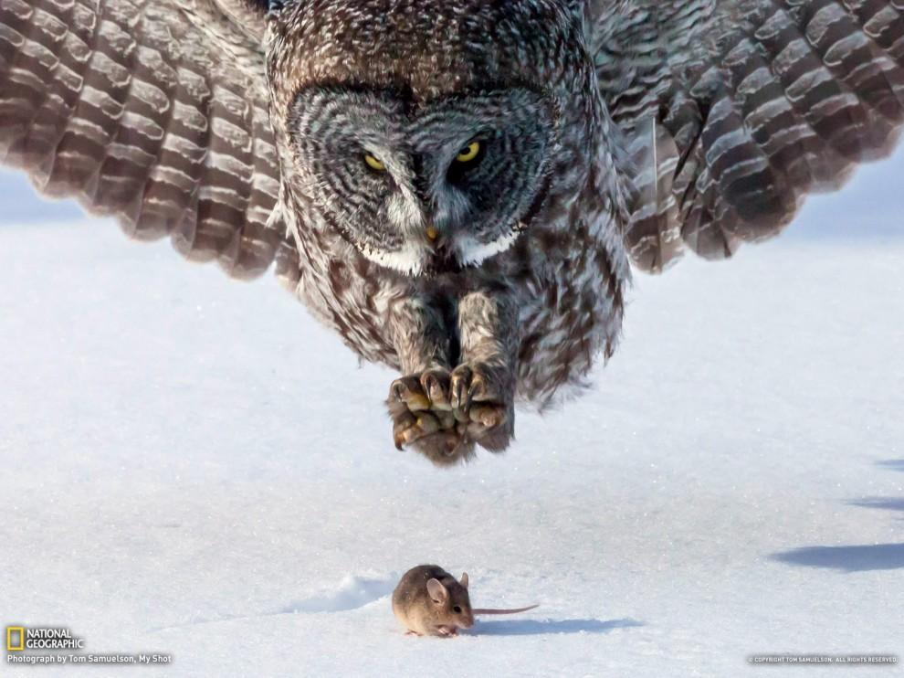 http://bigpicture.ru/wp-content/uploads/2013/04/natgeowllpprs10-990x742.jpg