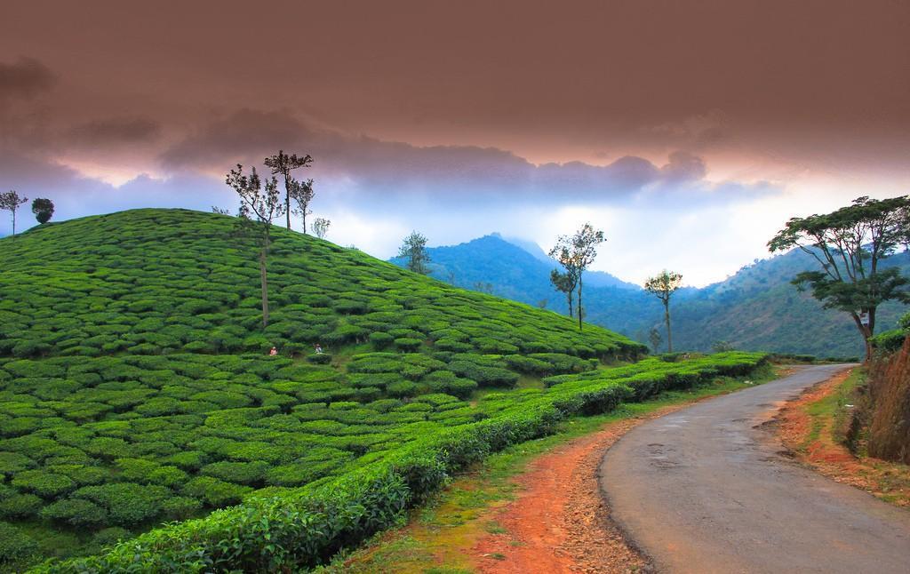 teaplantation01 Зеленые ковры чайных плантаций в Индии