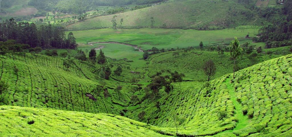 teaplantation14 Зеленые ковры чайных плантаций в Индии