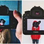 Владельцы домашних животных и их питомцы в причудливом фотопроекте #petheadz