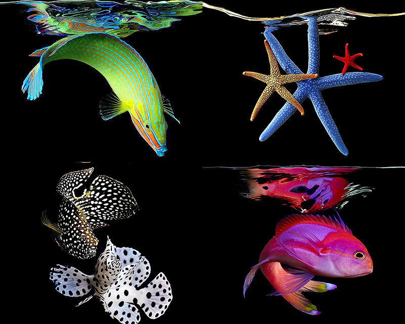 BIGPIC2 Неоновые портреты экзотических морских обитателей