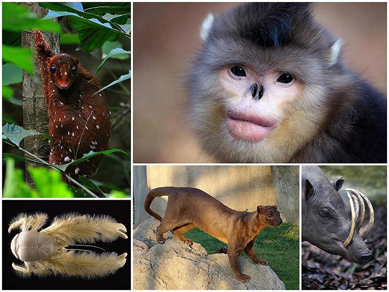 BIGPIC49 Животные, о существовании которых вы может даже и не знали