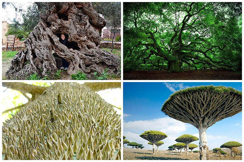 Самые удивительные деревья в мире