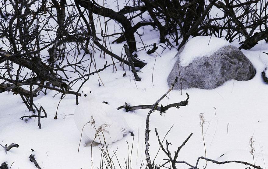 Camouflage04 Животные мастера маскировки