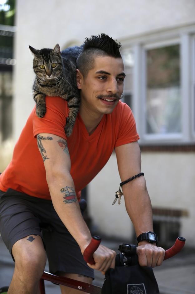 CyclistandCat07 Велосипедист и его кошка