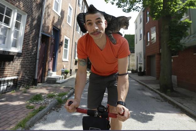 CyclistandCat11 Велосипедист и его кошка
