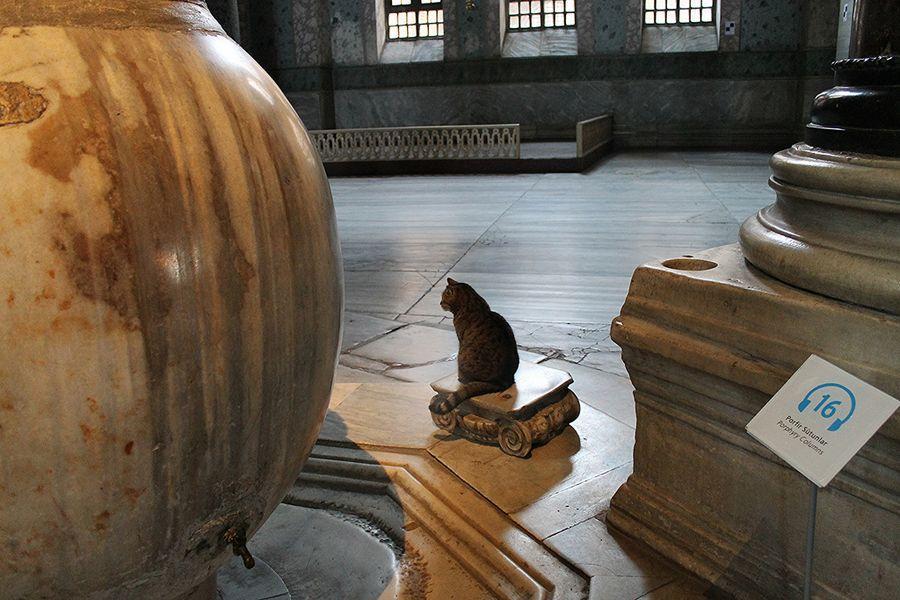 DevoutCat09 Пушистый хозяин собора святой Софии
