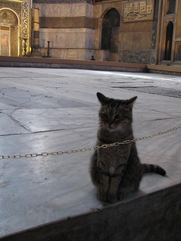 DevoutCat12 Пушистый хозяин собора святой Софии