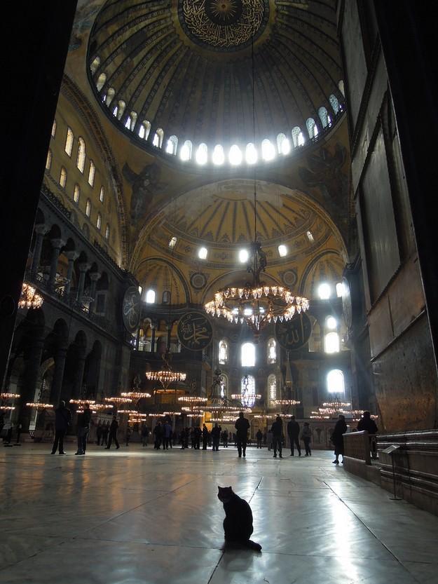 DevoutCat19 Пушистый хозяин собора святой Софии