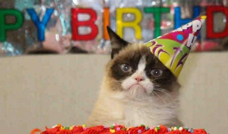 Самый сердитый кот интернета стал музой для художников