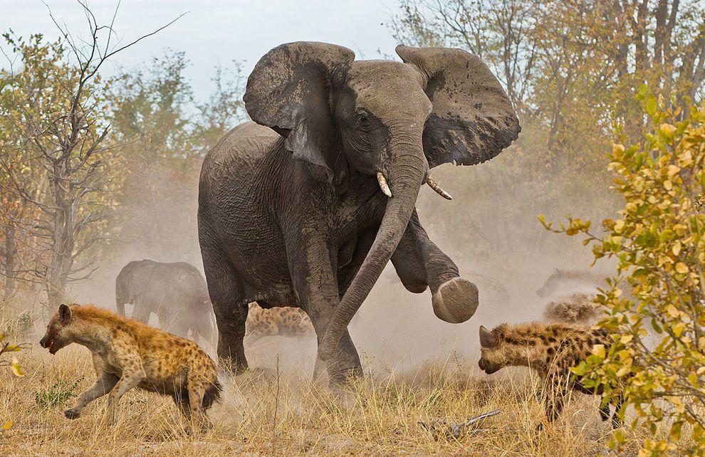 фото африки закат
