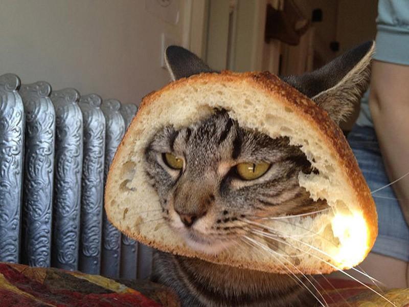 Коты придурки картинки