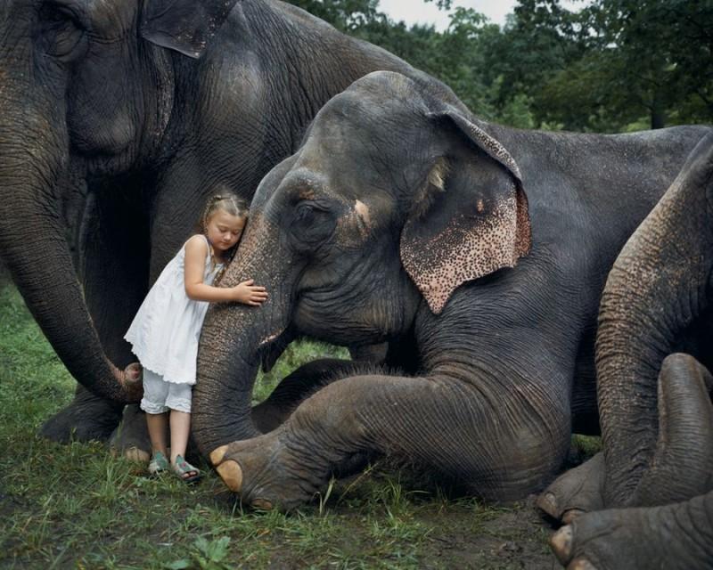 Schwartz01 800x640 Мир Амелии   девочка и ее животные