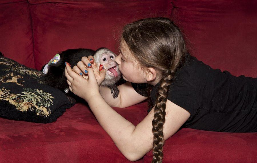 Schwartz15 Мир Амелии   девочка и ее животные