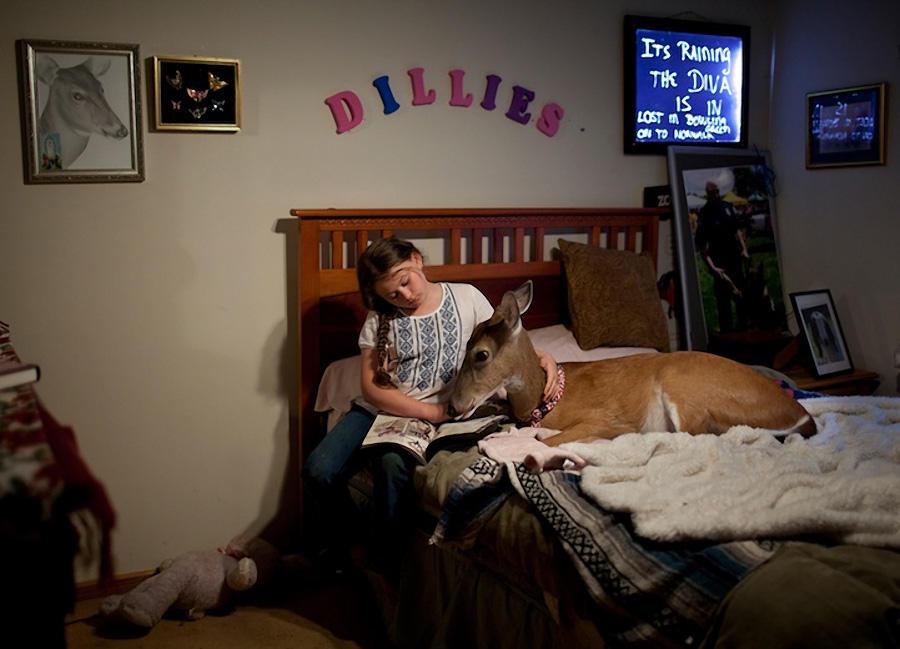 Schwartz17 Мир Амелии   девочка и ее животные